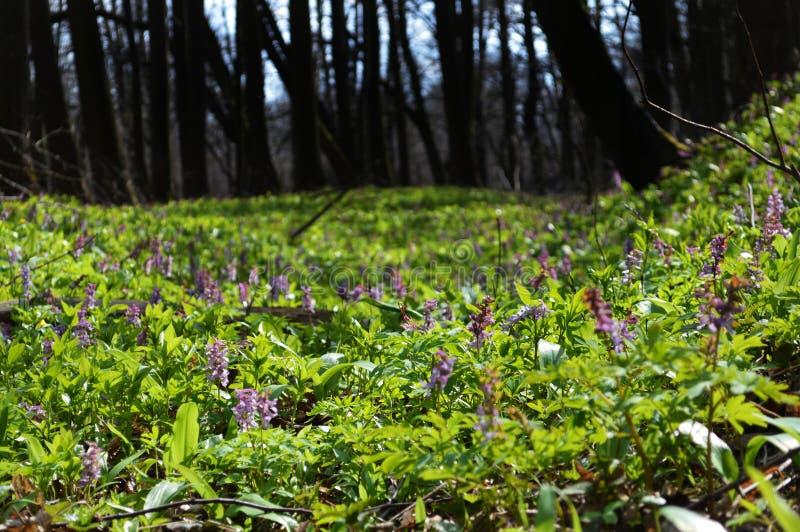 Geheimzinnige magisch van het bos stock afbeeldingen