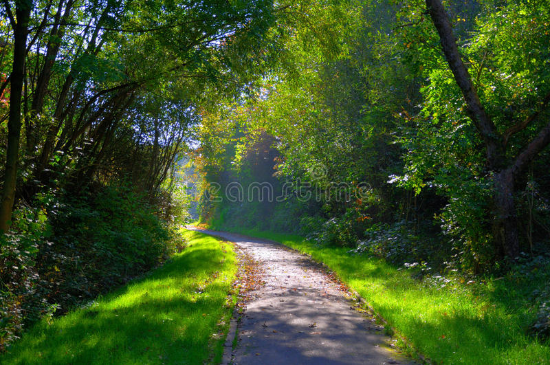 Geheimzinnige schaduwrijke groene steeg met bomen royalty-vrije stock foto's