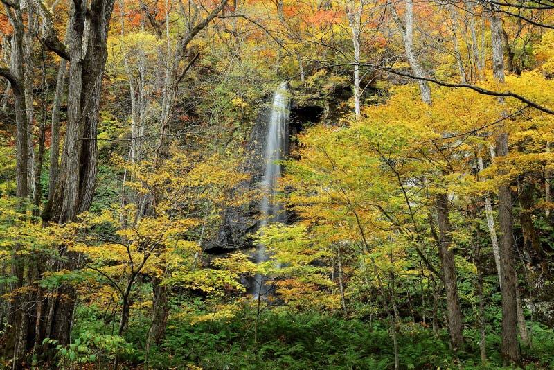Geheimzinnige waterval in het de herfstbos van het Nationale Park van Towada Hachimantai, Aomori Oirase Japan stock foto's