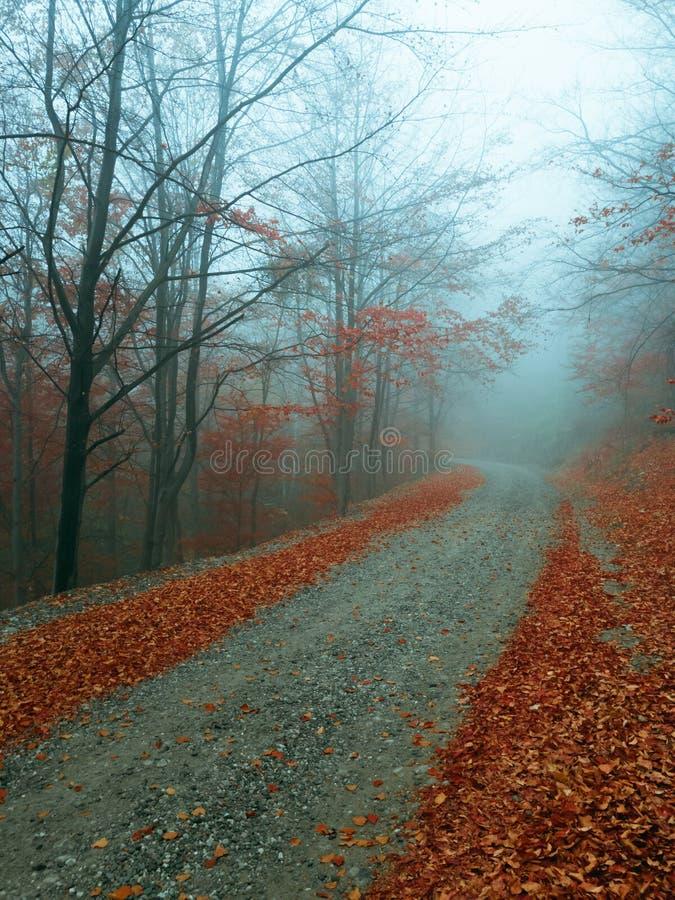 Geheimzinnige weg in mistige bos Herfst blauwe mist royalty-vrije stock foto