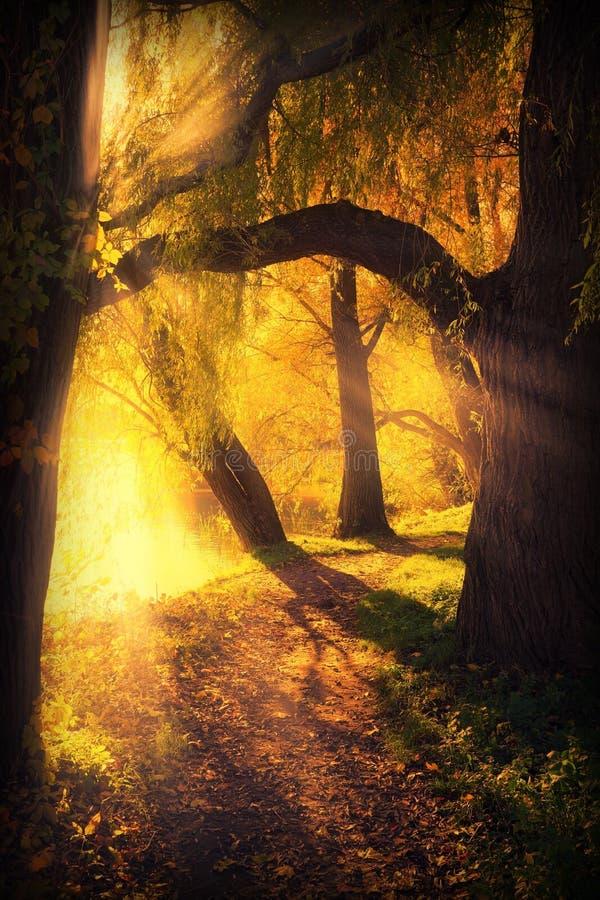 Geheimzinnige weg tussen boog van bomen stock foto