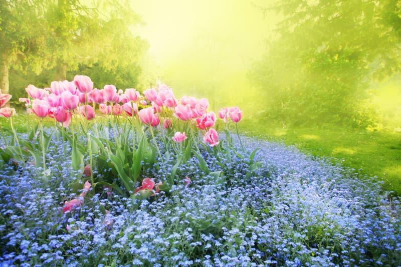 Geheimzinnige zonnige tuin royalty-vrije stock fotografie