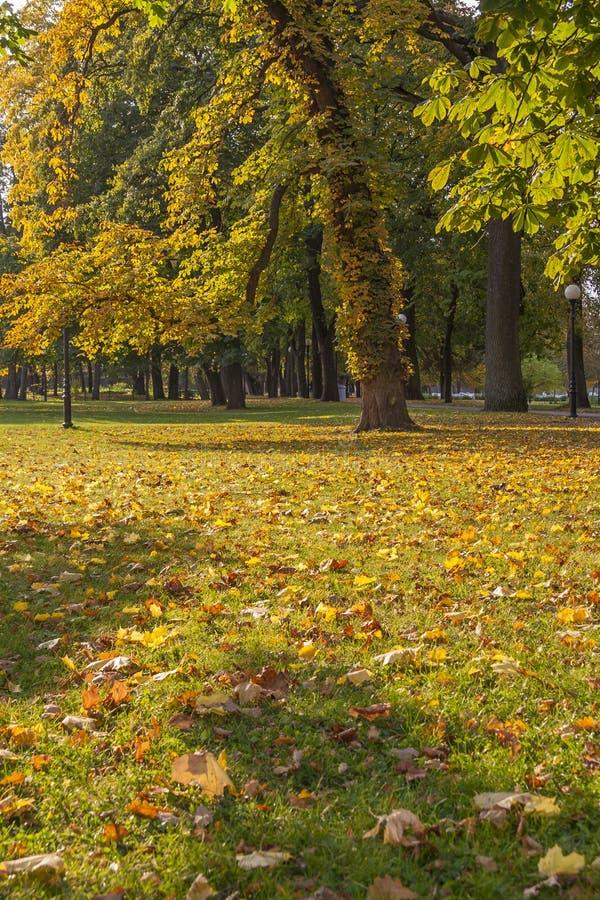Geheimzinnigheid Autumn In The Park royalty-vrije stock foto