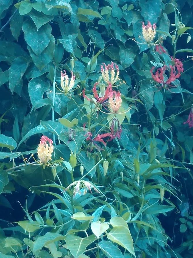 Geheimzinnigheid bloemen stock fotografie