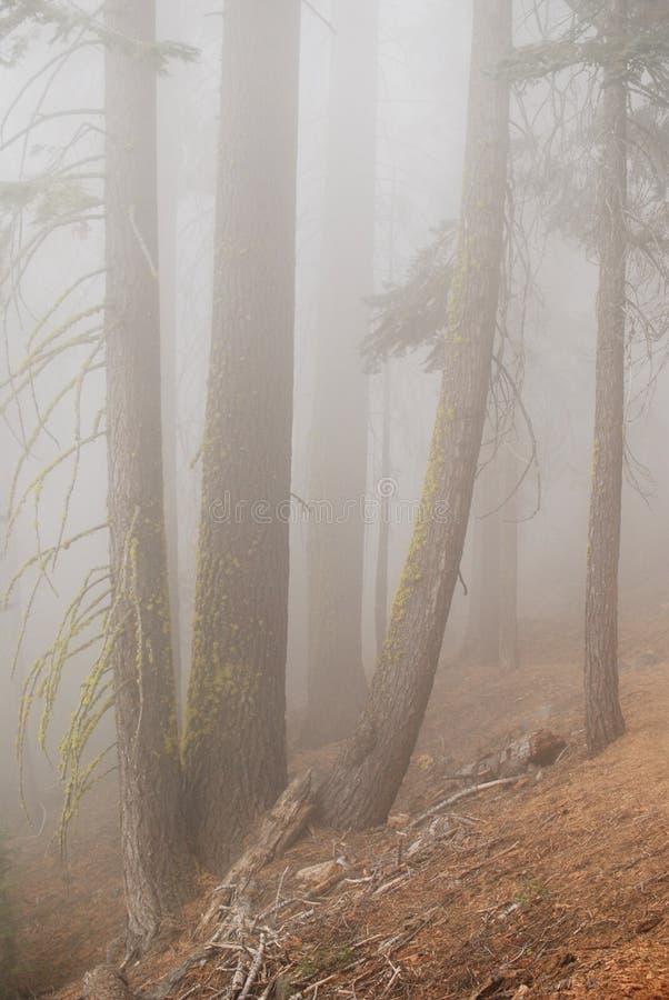 Geheimzinnigheid bos in dichte mist stock afbeeldingen