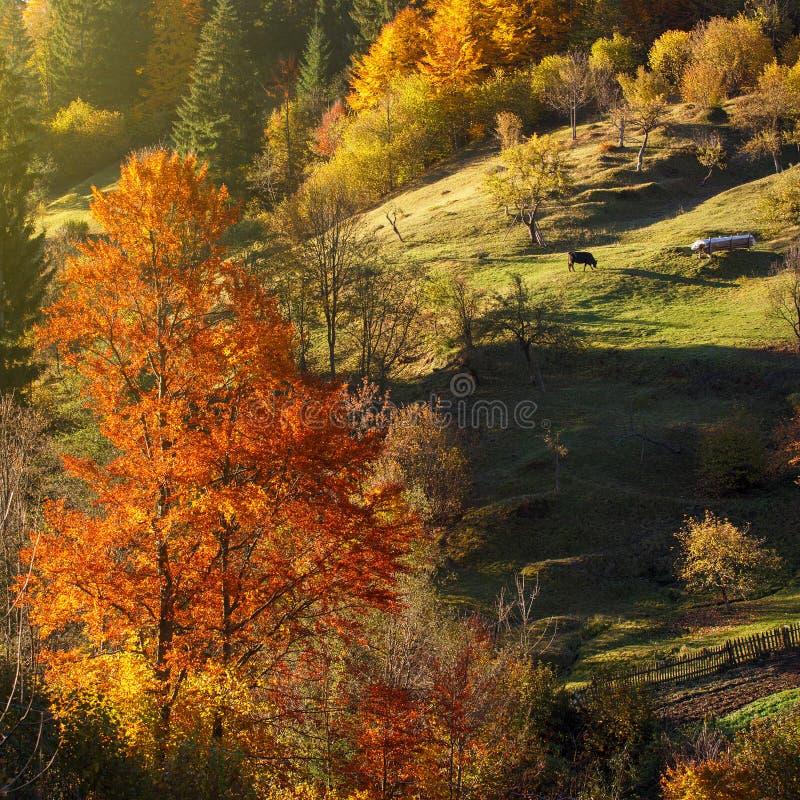 Geheimzinnigheid de herfstlandschap met gele bomen en dalende bladeren royalty-vrije stock afbeeldingen