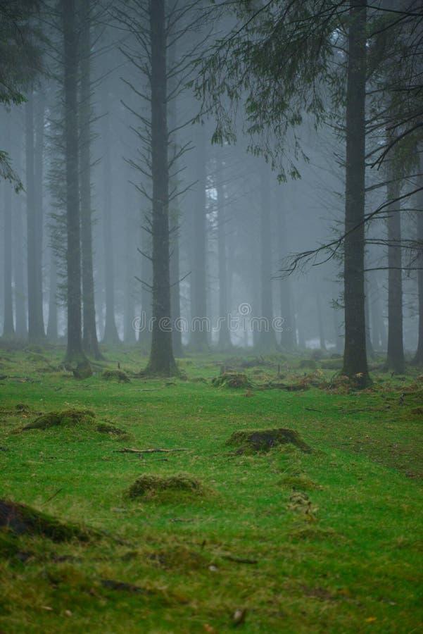 Geheimzinnigheid Mist in donker bos stock foto