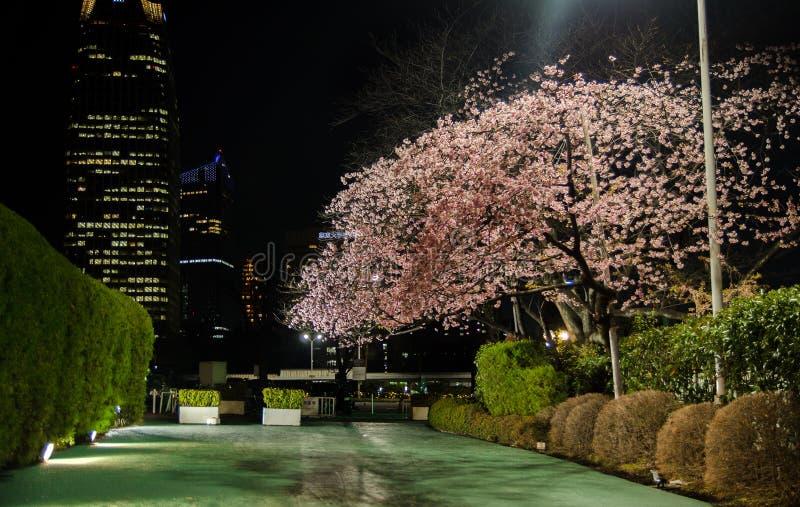 Geheimzinnigheid tuin met Cherry Blossoms bij nacht in Tokyo royalty-vrije stock afbeeldingen