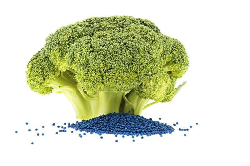 Gehele broccolibloem en zijn zaad stock fotografie