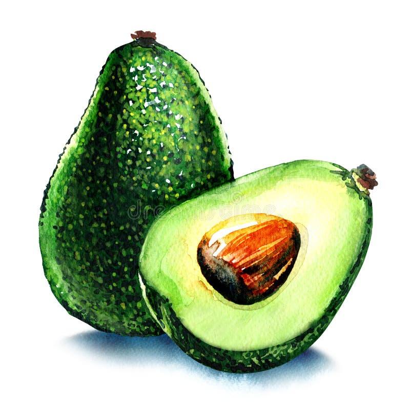Gehele en halve avocado op wit royalty-vrije illustratie