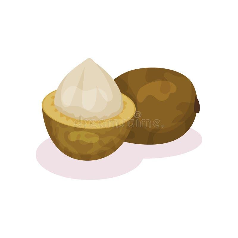 Gehele en helft-gepelde bacuri Platoniainsignis Rijp exotisch fruit Zonnebloemzaden - zaadfonds Gedetailleerd vlak vectorontwerp stock illustratie