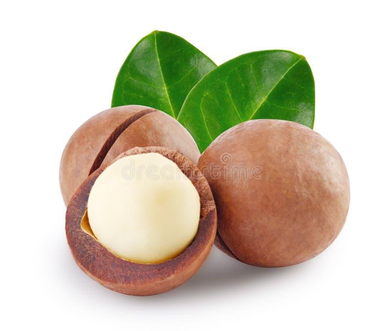 Gehele en open Australische macadamia noot met groen blad twee royalty-vrije stock afbeelding