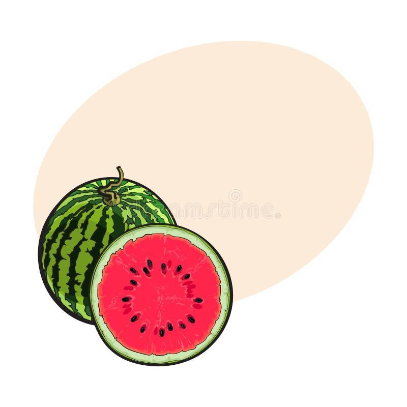 Gehele gestreepte watermeloen en besnoeiing in de helft, schetsillustratie stock illustratie