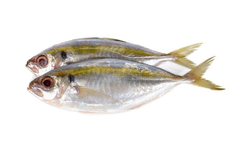 Gehele ronde verse geel-streep scad vissen op wit stock afbeeldingen