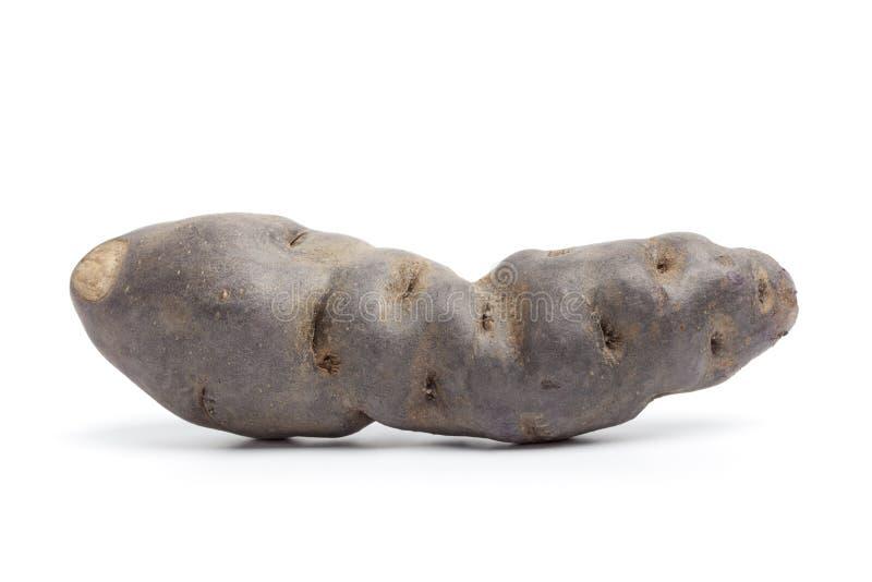 Gehele verse noir aardappel Vitelotte royalty-vrije stock afbeelding