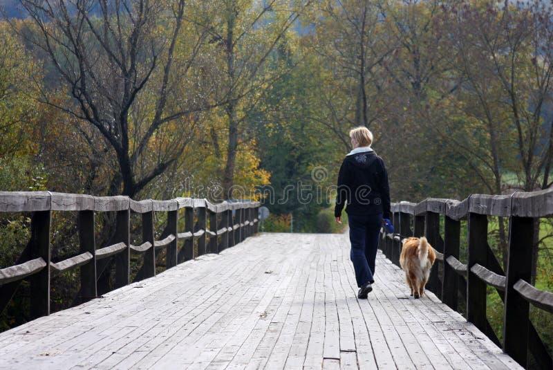 Gehen der Hund stockfotos