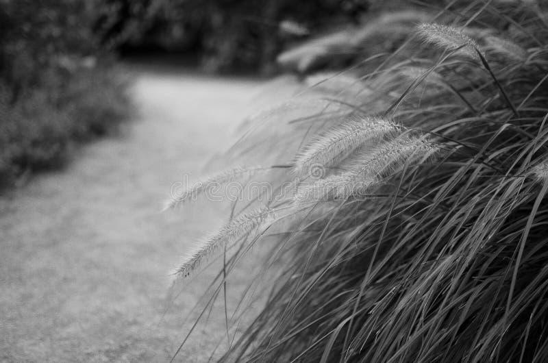Gehen durch den Garten lizenzfreies stockbild