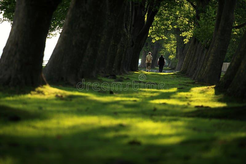 Gehen durch den Wald stockfotografie