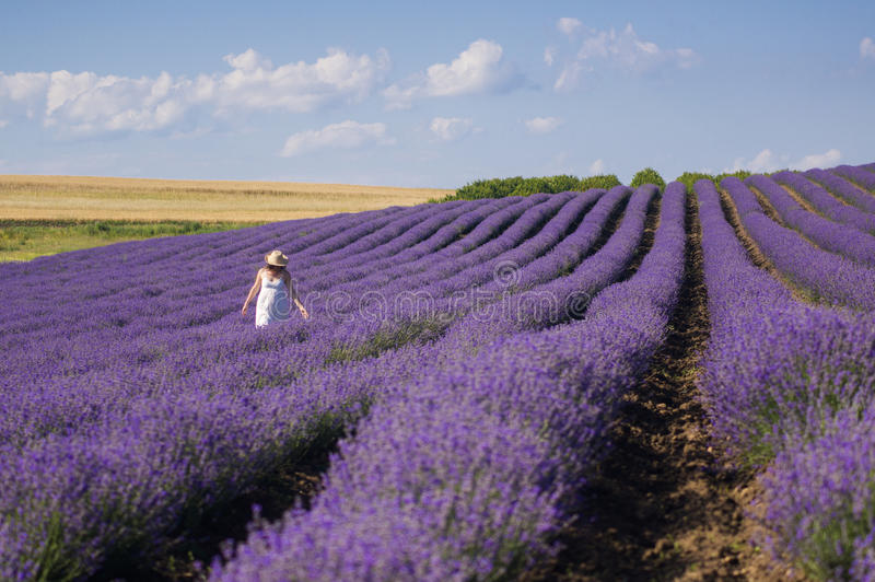 Gehen durch Lavendel stockfoto