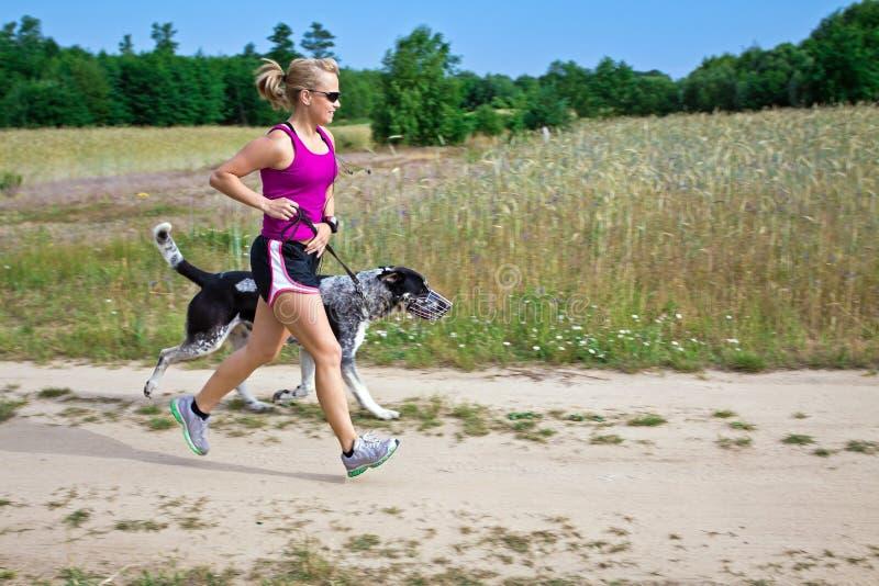 Gehen ein Hund in der Sommernatur lizenzfreie stockbilder