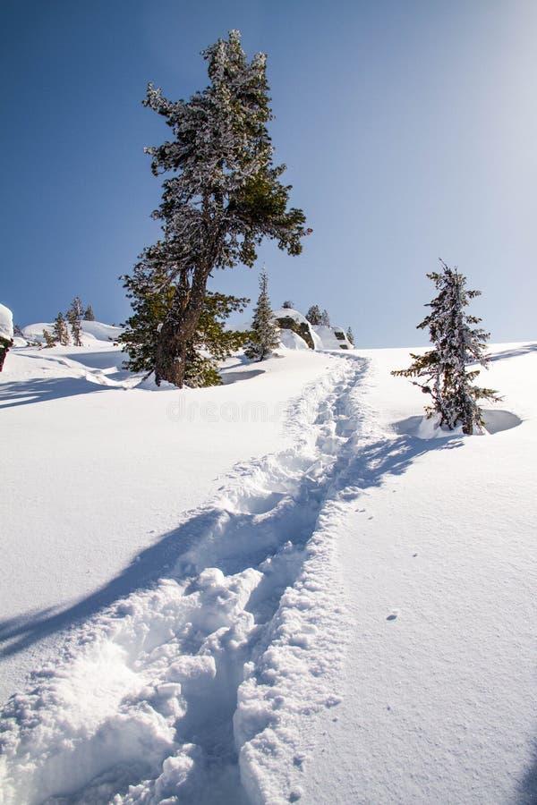 Gehen in einen schneebedeckten Wald stockfotografie