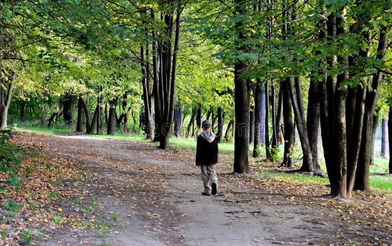 Gehen in Herbstwald alleine lizenzfreie stockbilder