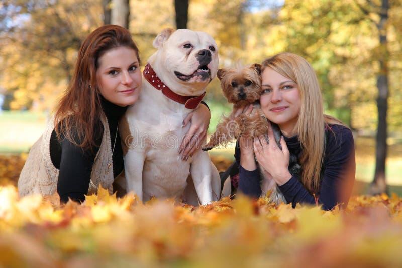 Gehen mit Hunden stockfotografie