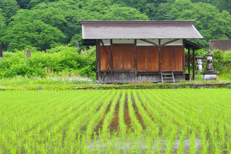 Gehen szenische Reisfelder des alten hölzernen Gebäudes, Shirakawa UNESCO, Japan lizenzfreie stockfotografie