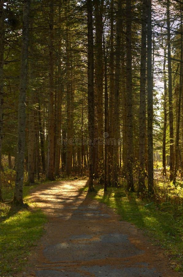 Gehende Hinterhintergrundbeleuchtete Bäume HDRs Sussex lizenzfreie stockfotos