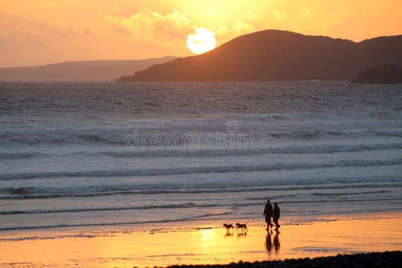 Gehende Hunde auf dem Strand stockfotos
