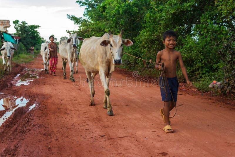 Gehende Kühe durch die Siem- Reaplandschaft stockfoto