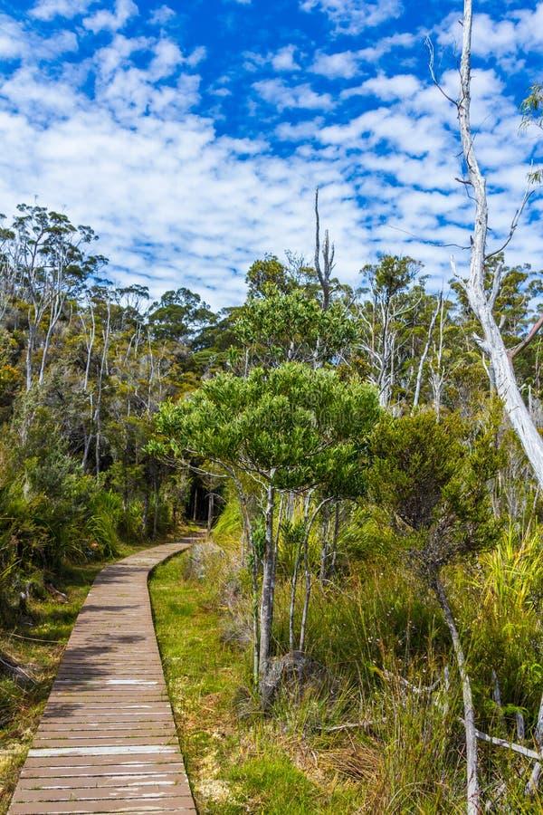 Gehende Plattform Bushs durch tasmanische Wildnis bei Hastings höhlt aus stockfotografie