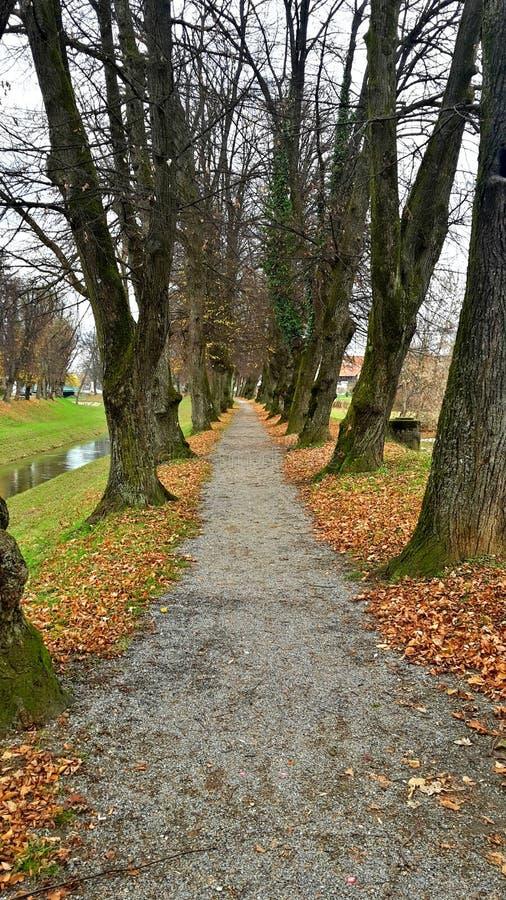 Gehende Spur des idyllischen Herbstes nahe dem kleinen Fluss lizenzfreies stockbild