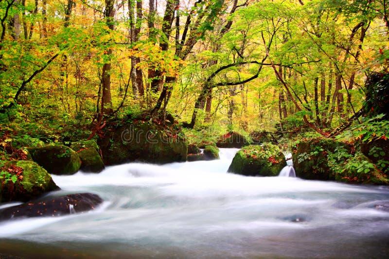 Gehende Spur Oirase während der Herbstsaison lizenzfreies stockfoto