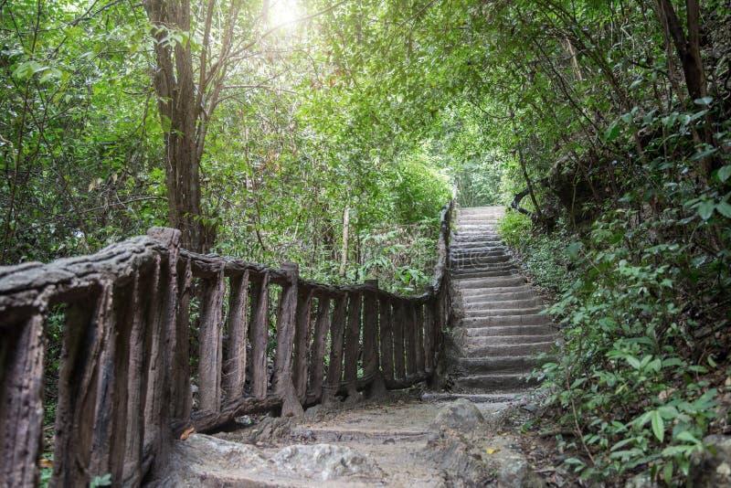 Gehende Weise weg von der Straße zum Dschungelregenwald lizenzfreie stockbilder