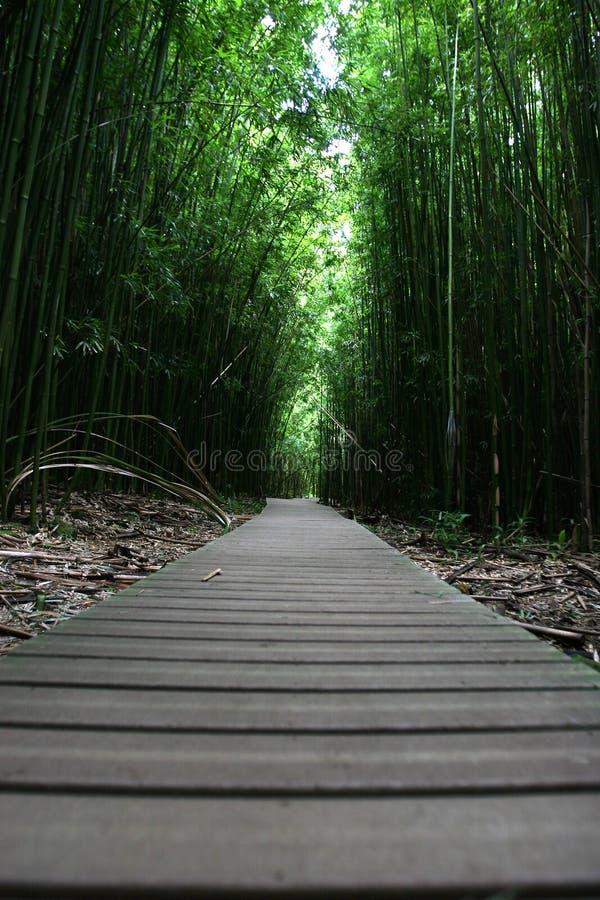 Gehender Pfad des Zen im Wald stockfotos