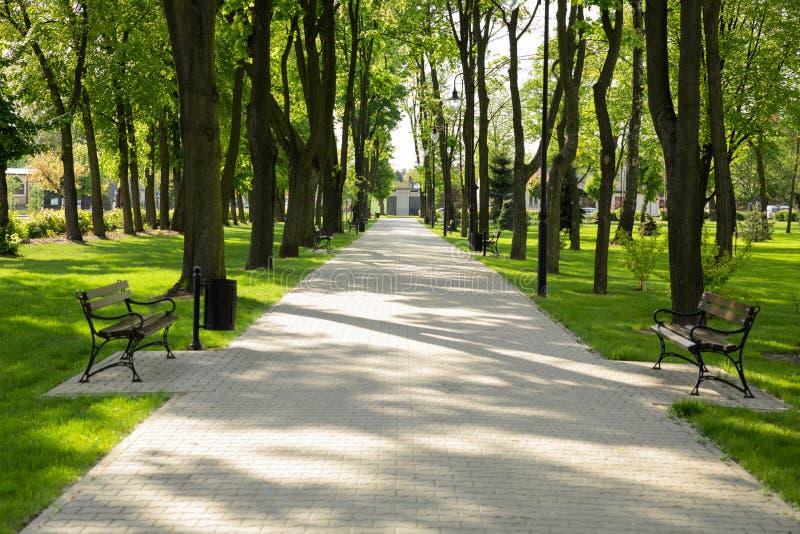 Gehender Pfad im Park Blühender Park des Frühlinges stockbilder