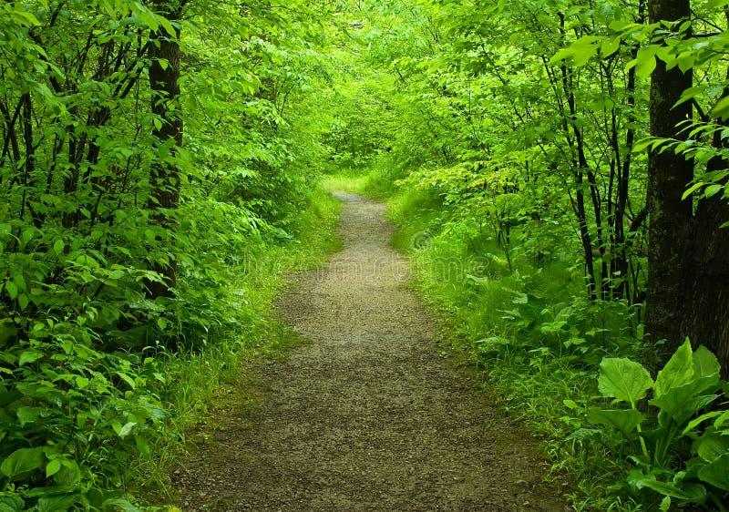 Gehender Pfad im Wald lizenzfreie stockfotos