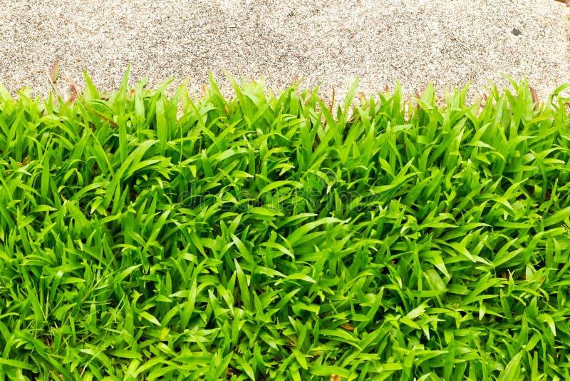 Gehender Stein und Gras lizenzfreie stockbilder