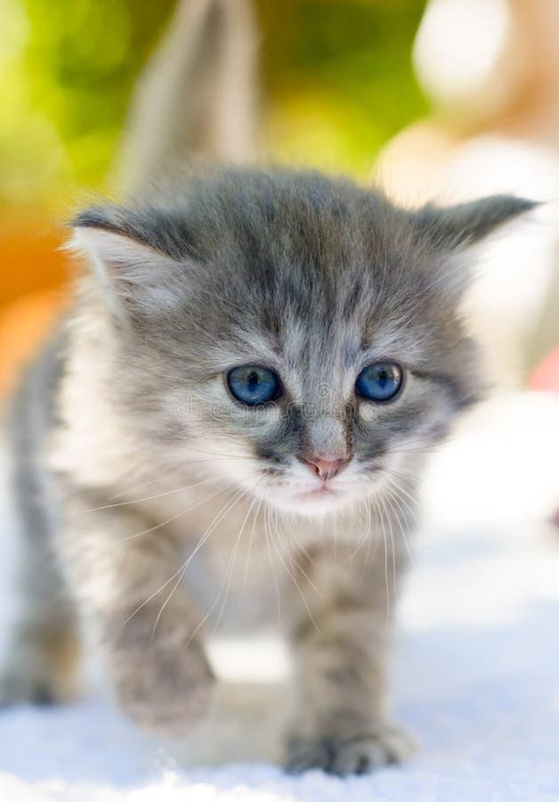 Gehendes Kätzchen stockbild