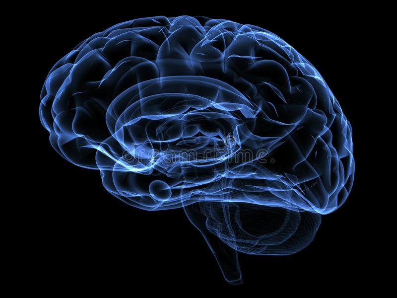 Gehirn lizenzfreie abbildung