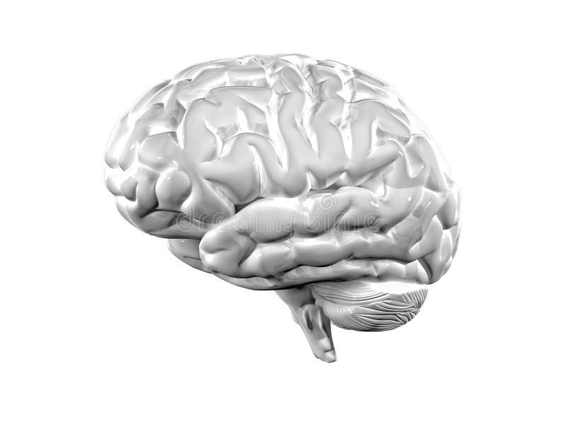 Gehirn 3d stock abbildung. Illustration von gehirn, medizinisch ...
