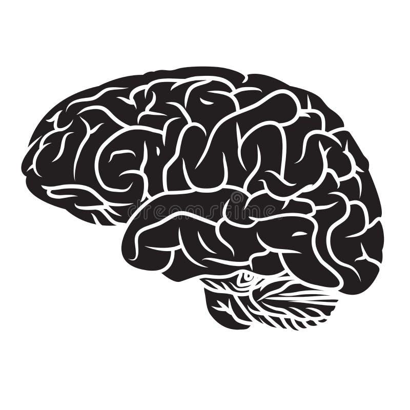 Gehirn 2 vektor abbildung
