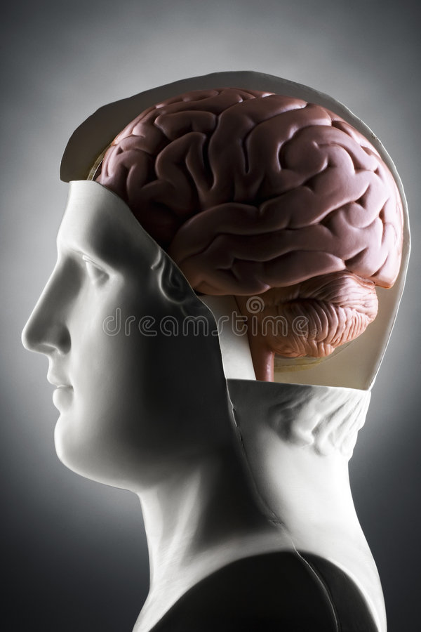 Gehirn stockfotografie