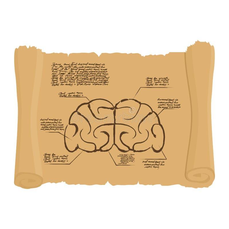 Gehirn Alter Rolle Zeichnung Altes Gehirn Diagramm Vektor Abbildung ...