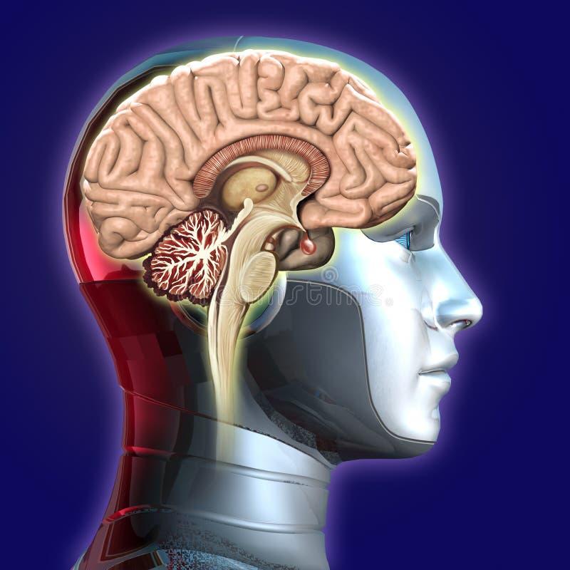 Gehirn auf Hauptroboter lizenzfreie stockfotos