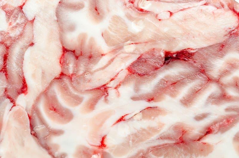 Gehirn-Beschaffenheit stockfotografie