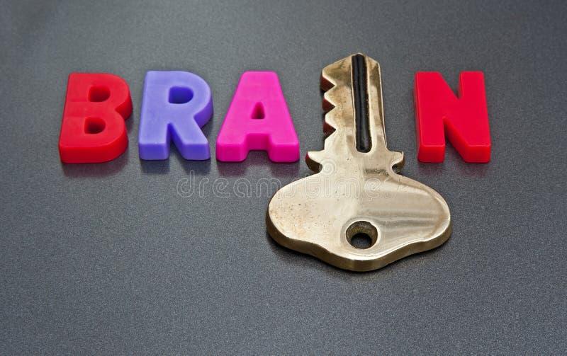 Gehirn hält den Schlüssel stockbild