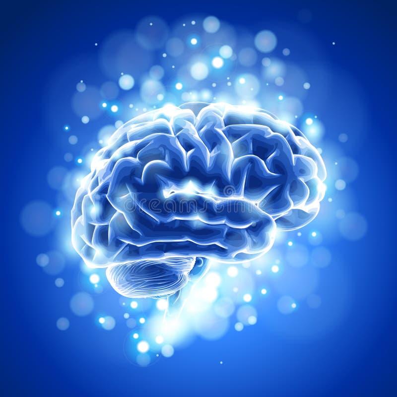 Gehirn u. blaues bokeh stock abbildung