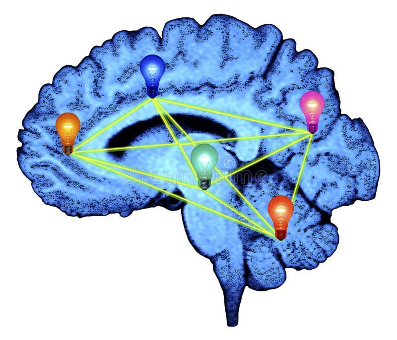 Gehirn und Glühlampen vektor abbildung